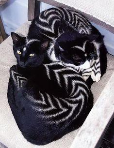 cats with unusual patterns, stripes, creative pet grooming ideas #catgroomingideas