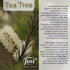 Aceite Esencial de Tea Tree... #justtetransforma ... Si quieres conocer más de nuestros productos... +info #WhatsApp📱+506 8879 7021 ... @… Herbs, Tips, Young Living, Blog, Planters Wart, Home, Heal Bruises, Canker Sores, Nasal Congestion