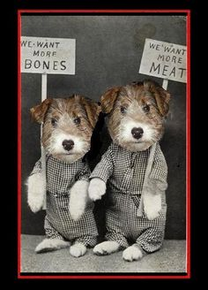 picketing canines...