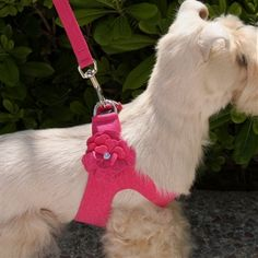Special Occasion harness