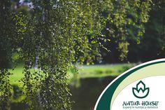 Un superaliment mai putin cunoscut este…mesteacanul. Scoarta, frunzele si mugurii de mesteacan sunt cunoscute si pentru propietatile medicinale. Extractul de seva de mesteacan permite eliminarea deseurilor care blocheaza sistemul digestiv, dar si pe cele care se acumulează in tesutul adipos. In plus, frunzele de mesteacan se folosesc mai nou la gatit, in salate sau in sosuri. Mai multe sfaturi de nutritie pe www.natur-house.ro