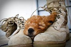 Puppy loves her soldier