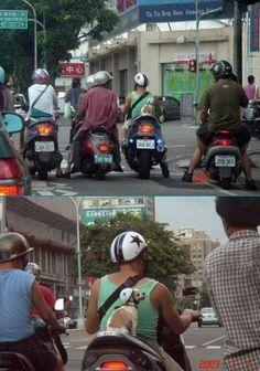 Dog on the bike
