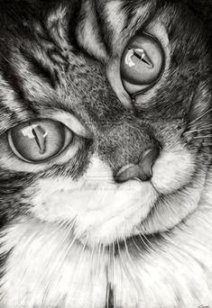 Cat Drawing by ~Vinnie14 on deviantART