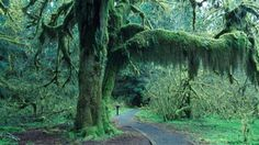 Hoh Rain Forest - makes you feel VERY small and insignificant within all the green grandeur