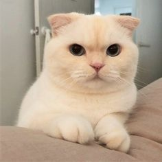 Read Prolog from the story Pacaran Cute Kittens, Cats And Kittens, Animals And Pets, Baby Animals, Funny Animals, Cute Animals, Cute Creatures, Cat Memes, I Love Cats