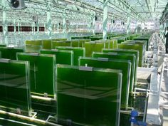 duckweed vertical farming - Google Search