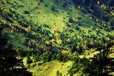 まるでジオラマの世界!日本一標高の高い国道から眺める秋の山肌