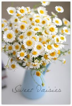 Daisies are a symbol of loyalty to love and commitment.  Also represent beauty, cheerfulness & joy