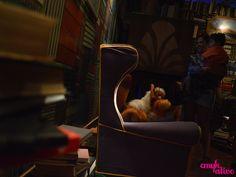 #expo #castelo #ratimbum #cultura #tvshow #MIS #gato