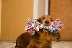 Isn't he cute? Flickr photo by pxls.jpg