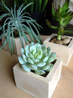 Succulent In A Tiny Wooden Box Planter For Home Decor Or Wedding Favor…