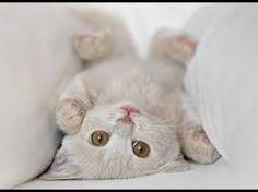 Resultado de imagen de gatos bonitos