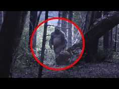 ATV Rider Spots Bigfoot With Baby on Logging Road (Enhanced Stabilized) - YouTube