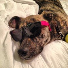 My puppy wins pet of the week! - This Pet of the Week sports cute sunglasses. (Submitted by @a_realm_of_truth)