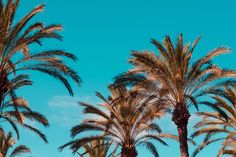 Palm tree's and blue skies, we're dreaming of an L.A getaway