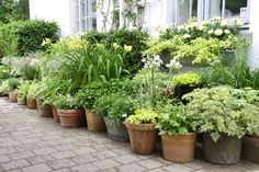 A row of containers / pots with charming plants and flowers against a house in Denmark Container Plants, Container Gardening, Small Gardens, Outdoor Gardens, Cottage Garden Plants, Herb Garden, Garden Terrarium, Garden Boxes, Growing Plants