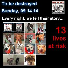 TO BE DESTROYED: 14 Dogs to be euthanized by NYC ACC- SUN. 9/14/14. This is a HIGH KILL shelter group. YOU may be the only hope for these pups! ****PLEASE SHARE EVERYWHERE!!To rescue a Death Row Dog, Please read this:  http://urgentpetsondeathrow.org/must-read/    To view the full album, please click here:    https://www.facebook.com/media/set/?set=a.611290788883804.1073741851.152876678058553&type=3