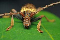 macro world Insects, Photos, Animals, Pictures, Animales, Animaux, Animal, Animais