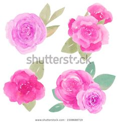 Стоковая иллюстрация «Handdrawn Watercolor Roses Set Leaves Isolated», 1508688719 Watercolor Rose, How To Draw Hands, Illustration, Flowers, Plants, Image, Illustrations, Flora, Plant