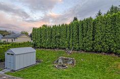 backyard privacy trees - Google Search