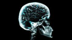 El cerebro tiene diez veces más memoria de lo que se pensaba
