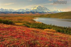 Fall Color In Denali National Park, Alaska by Kevin McNeal on 500px