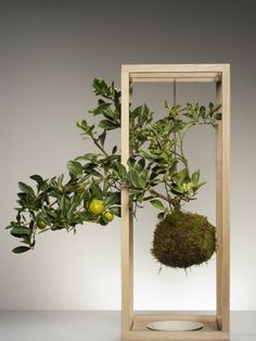 I like the idea of doing a kokedama for a citrus, maybe with mini ferns. But I'd have to be careful about what soil mix to plant it in. (Don't use floral foam, it's not biodegradable.)