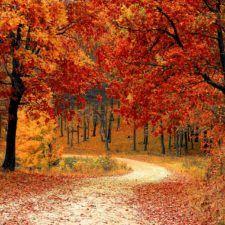 Wann ist endlich wieder Herbst?