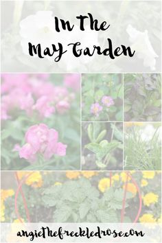 May Garden Update | angiethefreckledrose.com