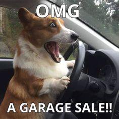 Funny corgi dog refrigerator magnet #corgi #funnydogmeme #dogmemes #some Corgi Funny, Funny Dog Memes, Corgi Dog, Funny Dogs, Cute Dogs, Stupid Animals, Funny Animals, Cute Animals, Animales