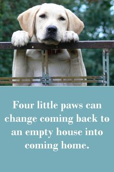 Dog Sayings Which Will Touch Your Heart Four little paws can change coming back to an empty house into coming home.Four little paws can change coming back to an empty house into coming home. I Love Dogs, Puppy Love, Cute Dogs, Labrador Dogs, Boxer Dogs, Yorkies, Dog Quotes Love, Dog Sayings, Animals