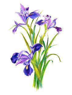 iris tattoo watercolor - Google Search