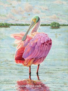 Beautiful Roseate Spoonbill Paintings and prints by The Florida Artist, Carol McArdle Grape Painting, Bird Painting Acrylic, Watercolor Bird, Oil Pastel Paintings, Animal Paintings, Watercolor Paintings, Selling Paintings, Stained Glass Birds, Animal Quilts