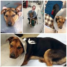 Injured pup, rescued by Connecticut police officer, is ready for a forever home