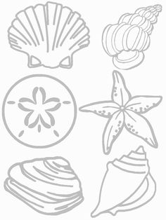 Shells Coloring Page | Seashore Collage Craft | Preschool Printable Activities