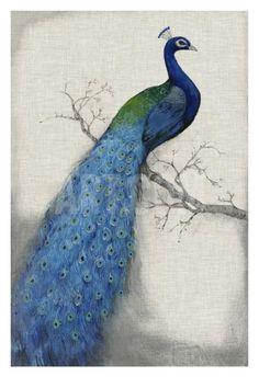 Peacock Blue I Art Print by Tim O'toole at Art.com
