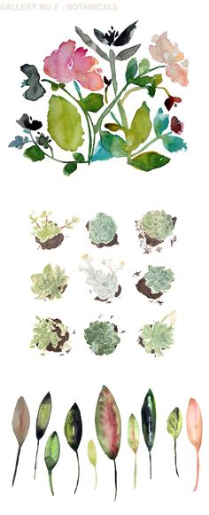 lovely watercolor botanicals