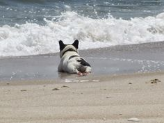 relaxing in the sand . . .I love this pic!