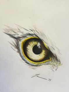 Eagle eye - tara hall - 2015 medium: pencil crayon drawings в 2019 г. Tatto Eagle, Eagle Chest Tattoo, Eagle Tattoos, Bird Drawings, Pencil Art Drawings, Animal Drawings, Eagle Sketch, Eagle Drawing, Vogel Tattoo