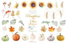 This set of high quality Hand painted Graphics - Pumpkins in Sunflowers Watercolor clipart - 36 Autumn separate elements with pumpkins, Sunflowers, ashberry, Watercolor Sunflower, Watercolor Flowers, Kids Graphics, Photoshop Elements, Fall Pumpkins, Nursery Art, Vector Design, Sunflowers, Digital Illustration