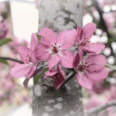 Добрый вечер, друзья! Продолжаем мечтать о весне и задабривать ее цветочными фотками. Я просто не знаю другого способа! 😃😃💕💜