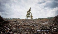 Photographer PHILIP ROSTRON - Greenpeace Protect - PictureOfTheWeek - ONE EYELAND