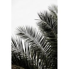 'Palm Leaves I' Graphic Art Print on Canvas Canvas Artwork, Canvas Art Prints, Painting Prints, Canvas Wall Art, Art Paintings, Wall Mural, Wall Prints, Black White Art, New Wall