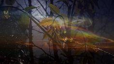 Nights of Silk and Tears  -  Ernesto Cortazar