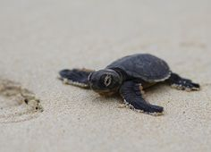 The Miracle of Mon Repos – Turtles Hatching on Australia's Beaches