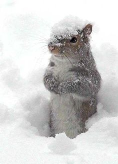 Ook de dieren hebben het koud in de winter. Maar dit lieve eekhoorntje dat wij tegen kwamen lijkt de sneeuw alleen maar heel erg leuk te vinden! Cute!