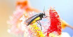Dít zijn die vervelende zwarte vliegjes bij je planten en zo kom je ervan af