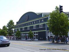 The Seattle Aquarium on Pier 59.