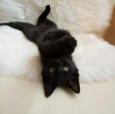 furry black cat | via ᏕᏂaᏒᎤᏲ